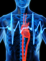 what works fact sheet cardiovascular disease prevention and control