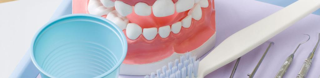 Small cup, model of healthy teeth, tooth brush on table to represent Oral Health, Cavity Prevention